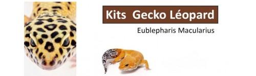 Kits Gecko Léopard