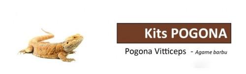 Kits Pogona